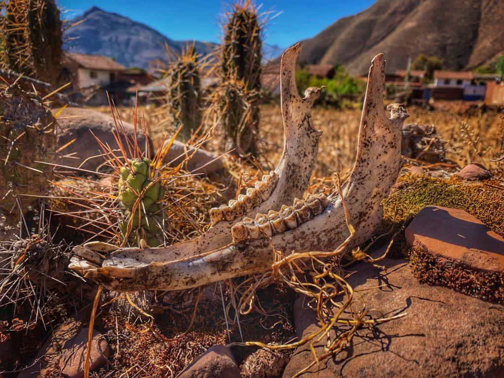 A skull in Andahuaylillas, Peru. Photo by Jeff Belanger.